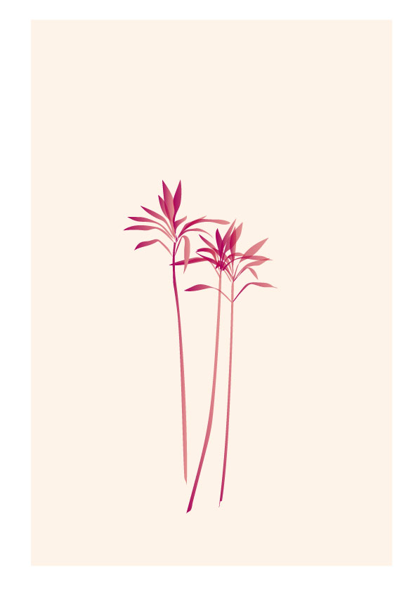 plant illustrations 1