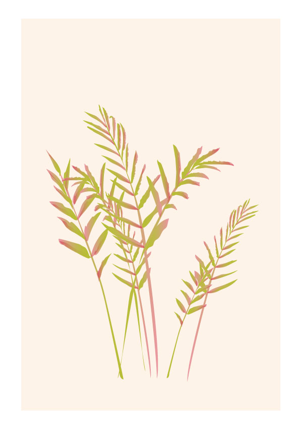 plant illustrations 2