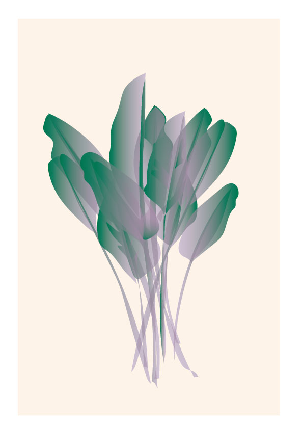 plant illustrations 3